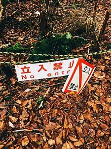 An unsettling visit to Aokigahara, Japan's 'Suicide Forest'