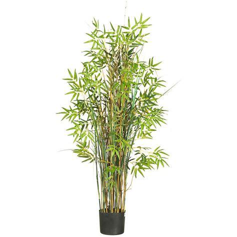 bamboo plants palms bamboo cambodiaplants