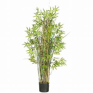Of A Bamboo Plant
