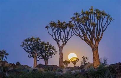 Quiver Trees Moon Desert Namib Biographic Kingdom