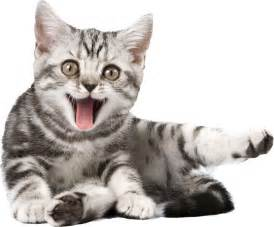 images of cats 12 best png chat images on animals and