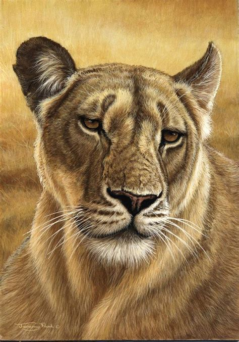 lioness pencil drawings drawing colored animal animals wildlife paintings cats kunst lion paul pencils cat jeremy leoparden tiere head zeichnen