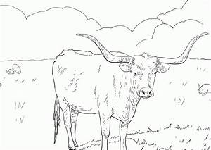 Texas Longhorn Coloring Page Coloring Home