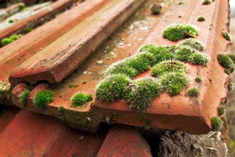 moos steinen entfernen moos auf dem dach 187 die 4 besten reinigungsmethoden