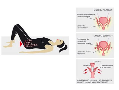 esercizi pavimento pelvico esercizi per rafforzare il pavimento pelvico esercizi di