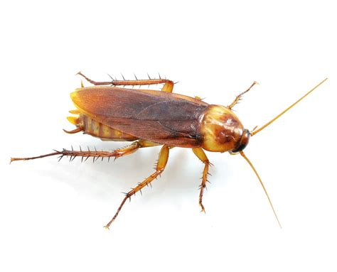 roaches harveys pest control