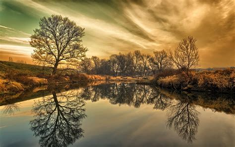 wonderful trees reflection wallpapers wonderful trees