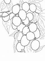 Coloring Pages Lychee Tree Kolorowanka Lychees Google Fruits Printable Dibujo Szukaj Recommended Zapisano Pl sketch template
