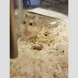 Robo Dwarf Hamster Cages | 736 x 981 jpeg 72kB