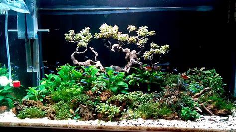 bonsai aquascape aquascape bonsai