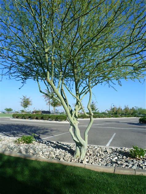 Where's Eldo?: Arizona Memories