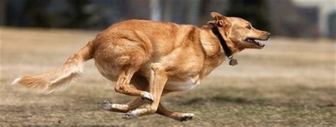 hart humane animal rescue team blog mutterings running