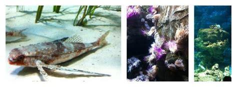 brunch aquarium de brunch aquarium de 28 images brunch 224 l aquarium de derni 232 res news breakfast picture