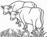 Coloring Printable Cow Pages Cows Easy Adults Drawing Colouring Farm Cool2bkids Getcolorings Preschoolers Getdrawings Paintingvalley sketch template