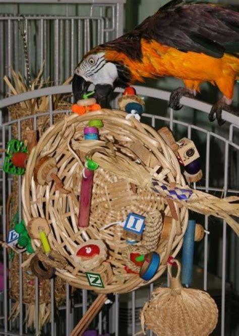 simplest ideas  diy toys  macaws