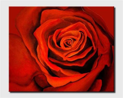 buy large red rose  closeup