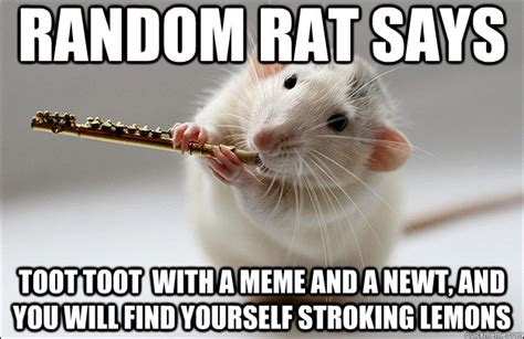 Rat Meme - random rat says toot toot with a meme and a newt and you will find yourself stroking lemons