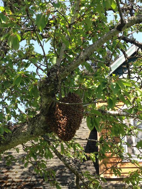 Honey Bees In Transition, Jim Senior