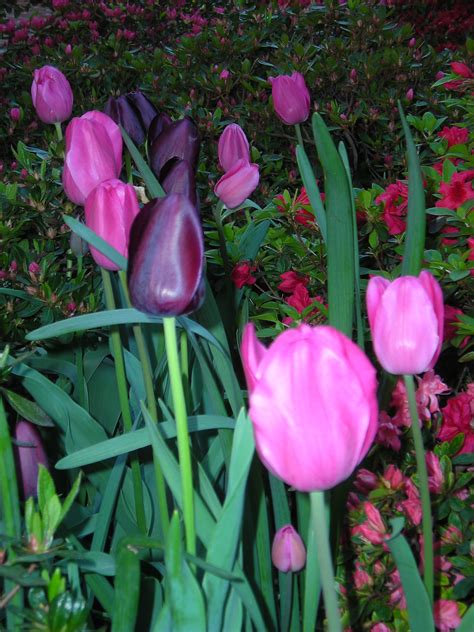 it s not late to plant bulbs master gardeners of