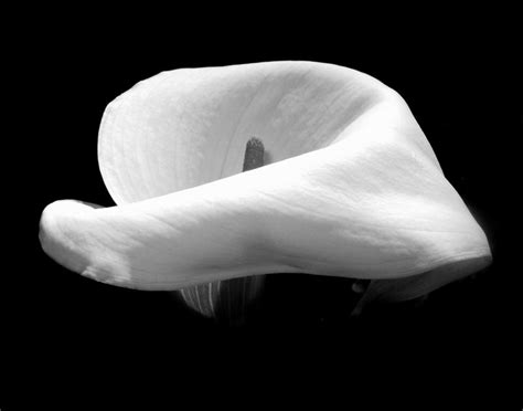 black and white color blind color blind flowers in black and white al levin