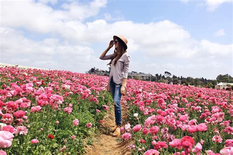 olive garden carlsbad carlsbad flower fields day trip the charming olive by