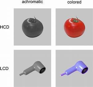 Examples Of Hcd And Lcd Stimuli Used In Experiment 1 And 2