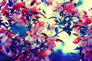 Retro Vintage Photography Flowers   fashionplaceface.com