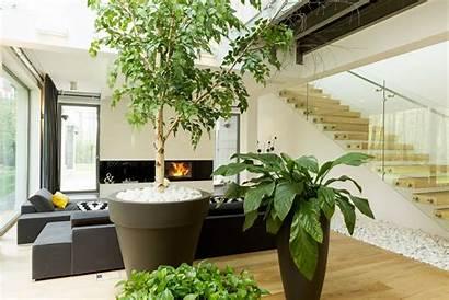Indoor Gardening Plant Greenery Benefits Garden Outside