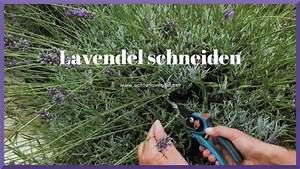 Verholzten Lavendel Schneiden : lavendel schneiden youtube ~ Lizthompson.info Haus und Dekorationen