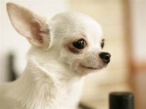 Animals Zoo Park: 8 Cute Puppies Wallpapers, Cute Puppy ...