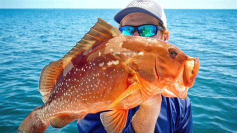 grouper catch cook clean fishing bottom tampa bay