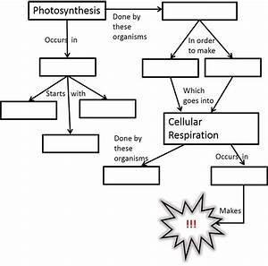Cellular Respiration Diagram For Kids