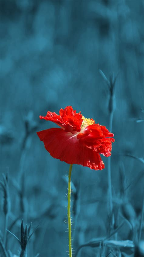 Choose from a curated selection of flower wallpapers for your mobile and desktop screens. Ultra HD Red Poppy Flower Wallpaper For Your Mobile Phone ...0497