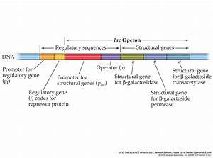 Regulatory Gene  Causes  Symptoms  Treatment Regulatory Gene