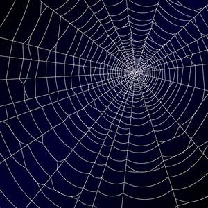Vector spider web design background graphics 04 - Vector ...