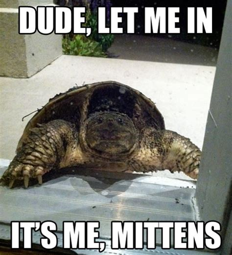 Funny Turtle Memes - come on dude it s me