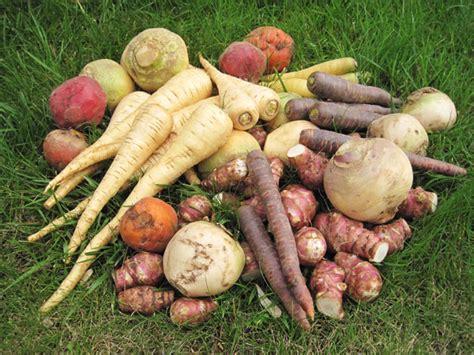 cuisine topinambour une recette facile à faire avec les anciens légumes du jardin