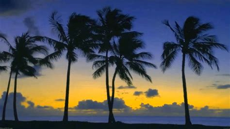Pictures Of Palm Trees Collection For Free Download