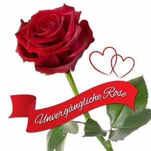 Geburtstag Berechnen : unverg ngliche rose das besondere geschenk das jahrelang h lt ~ Themetempest.com Abrechnung