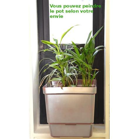 pot pour plante grimpante