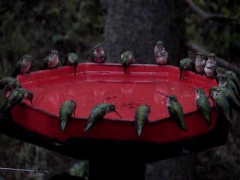 worlds largest hummingbird feeder dzerres swarm