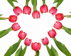 Herz Bilder Kostenlos Downloaden : blumen herz aus tulpen tulpenherz lizenzfreie fotos bilder kostenlos herunterladen ohne ~ Eleganceandgraceweddings.com Haus und Dekorationen