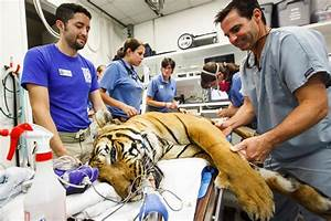These Vets Go to Extremes to Keep Animals Healthy