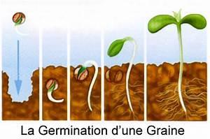 Comment Faire Germer Une Graine : comment faire germer des graines de cannabis biotops biz ~ Melissatoandfro.com Idées de Décoration