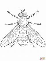 Fly Coloring Horse Mosca Printable Coloriage Mouche Colorare Drawing Disegni Template Sheets Through sketch template