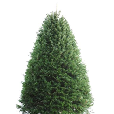 fresh xmas trees at walmart 17 best ideas about douglas fir tree on balsam tree balsam fir