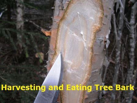 harvesting eating tree bark  prepared page