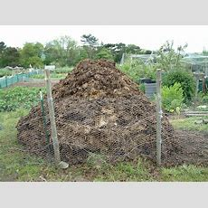 Top January Allotment Tips