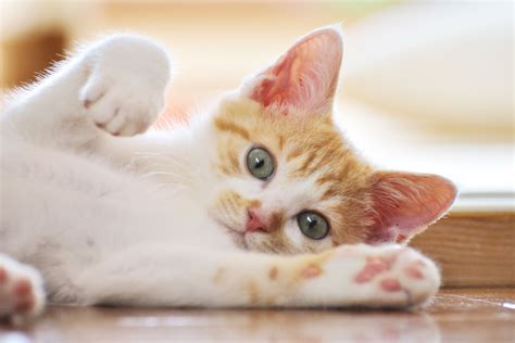 Panleukopenia In Cats Signs Diagnosis And Treatment