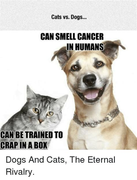 memes  cats  dogs cats  dogs memes